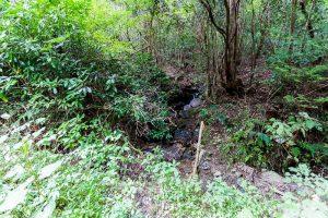 東筑波ハイキングコース登山道付近の湧き水
