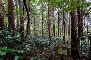 東筑波ハイキングコースの案内板。樹齢100年を超える人工林の森
