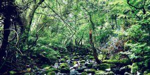 筑波山ヒーリング夏さんぽ2020
